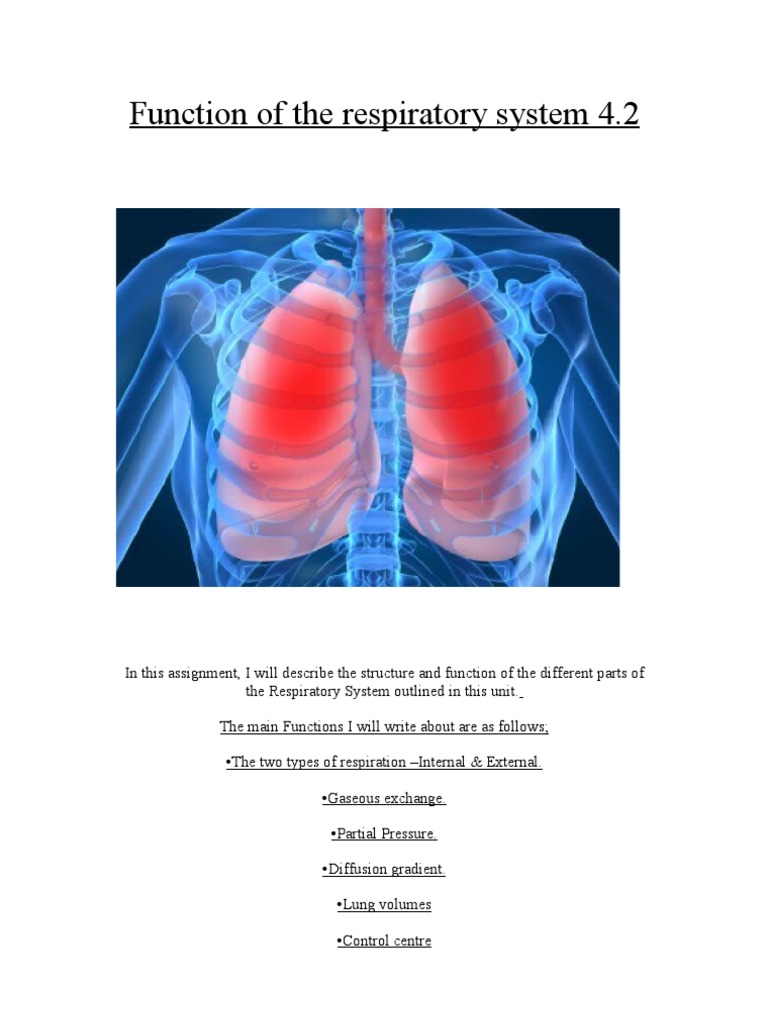 Function Of The Respiratory System 42 Breathing Respiratory System