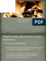Stem Cells Project