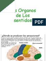Los Organos de Los Sentidos-Trabajo en Grupo-Cetecos I