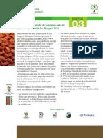 año internacional de los bosques 2011