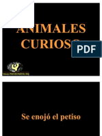 animalescuriosos