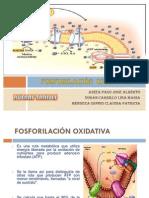 FOSFORILACION OXIDATIVA (2)