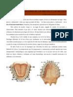 Relaciones de Los Dientes y Los Organos