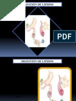 Digestion de Lipidos FMHDAC Ica