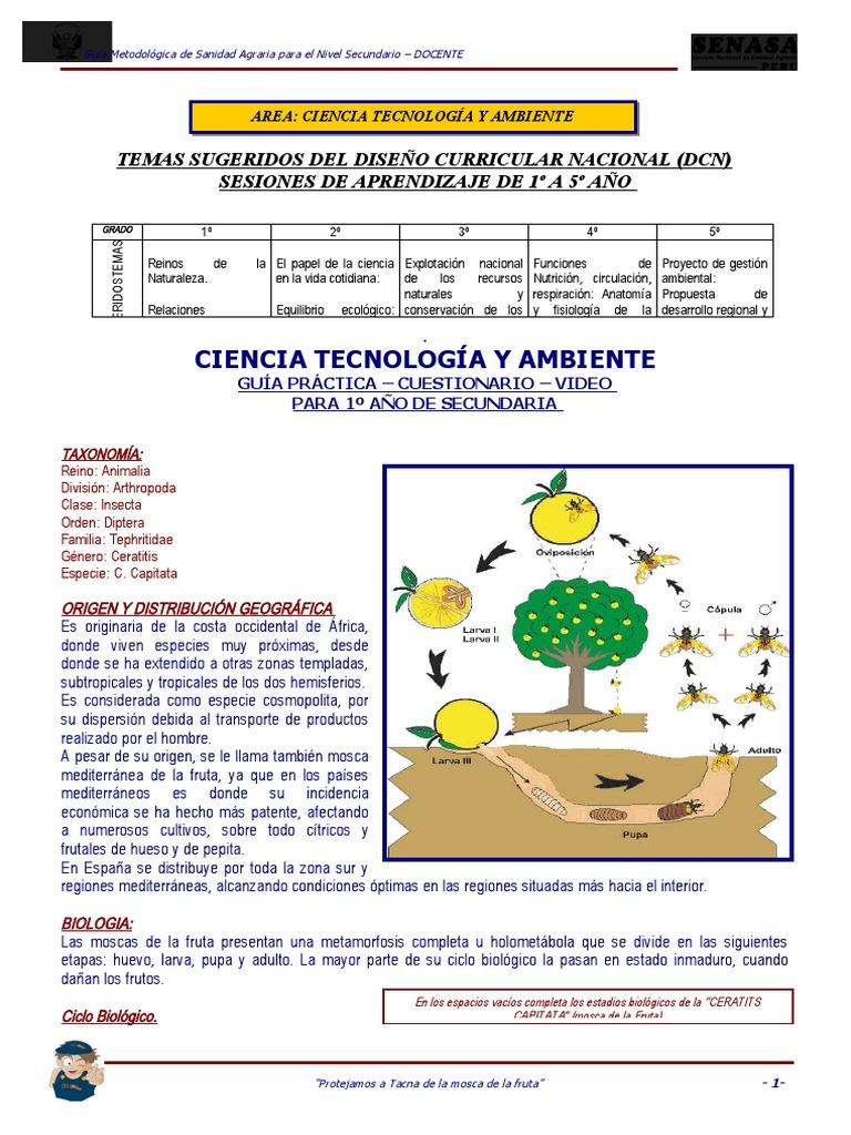 diversificación curricular mosca de la fruta
