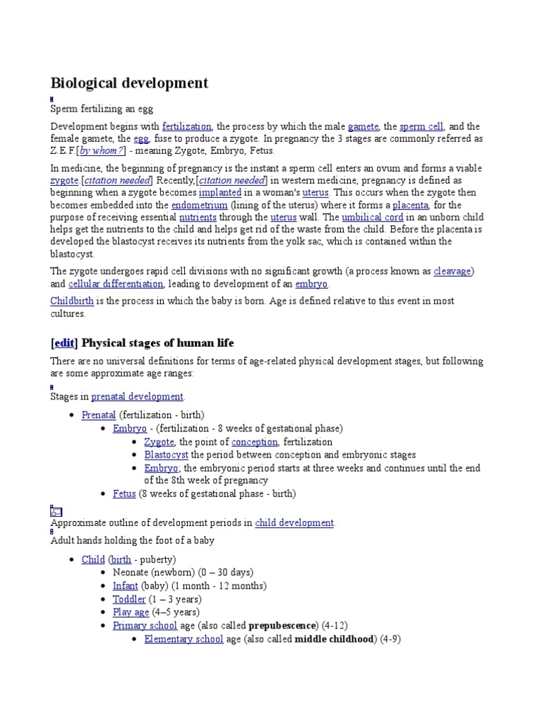 Growth And Development Prenatal Development Anatomy