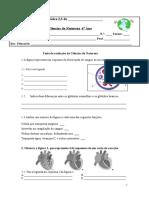 Ficha de avaliação sistema circulatório 6 º ano