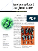 abacaxi micropropagação