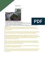 Memetik Uang Dari Investasi Pohon Jabon