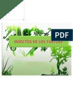 Insectos de Los Tuxtlas