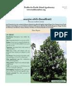 A.altilis Breadfruit