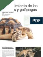 6 Mantenimiento de las tortugas y galápagos