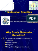 Notes-Molecular Genetics