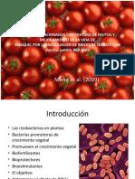 Bacillus Tomate Mena 2009
