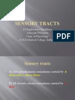 Sensory Tracts
