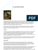 Marsupiais