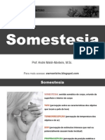 Fisiologia - Somestesia
