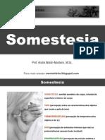 Fisiologia - Somestesia