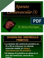 31 Aparato Cardiovascular (3)