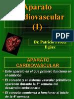 29 Aparato Cardiovascular (1)