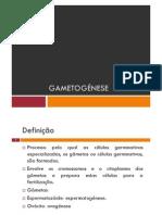Microsoft PowerPoint - Gametogénese