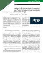 Regulación génica Trypanosoma cruzi