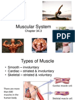 Ch 34 Muscles