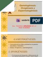 Gametogén..rr