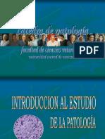 1a Clase Introducción a la AnatomíaPatológica FCV-UCV Carolina Rodríguez-Cariño