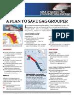 Pew Gag Grouper 051911