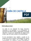 CAÑA DE CASTILLA
