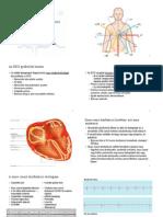 ekg.02-bevezetes.az.EKG.analizisbe.02.es.03