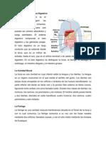 Sistema Digestivo Chicha