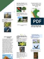 8 Regiones Naturales Del Peru