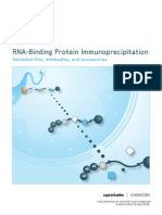 RNA-Binding Protein Immunoprecipitation