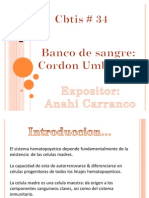 Banco de Cordon Umbilical Version 97-03