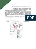 ensayo de arterias