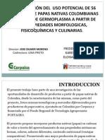 Determinación del uso potencial de 56 variedades de papas nativas colombianas del banco de germoplasma a partir de sus propiedades morfológicas, fisicoquímicas y culinarias