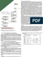 Metabolismo intracelular de ácidos grasos