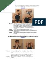 4-Elongacion de Musculos Inc Lin Adores