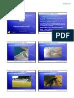 A água e as atividades humanas PPT
