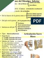 b) Artrologia