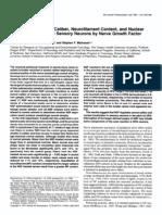 Nerve growth factor and axonal diameter. Journal of Neuroscience, 1991.
