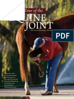 Take a Tour of the Equine Joint