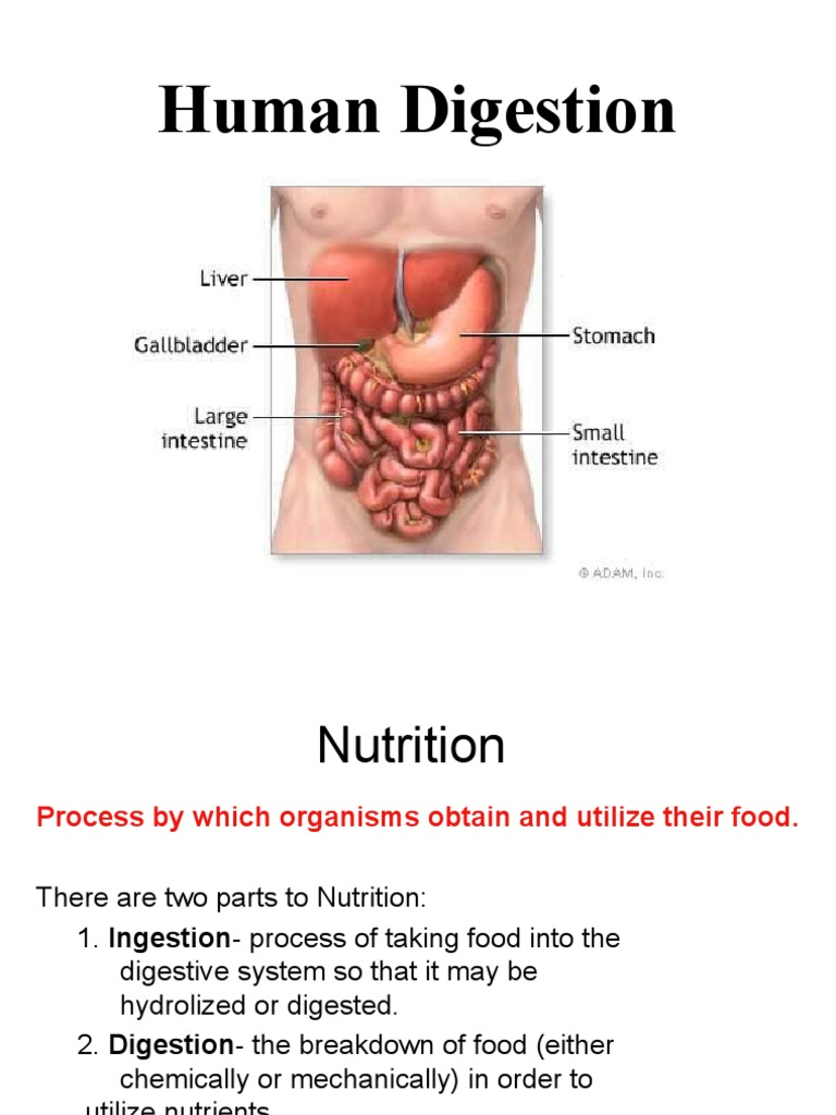 The Digestive System Digestion Bile