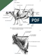 Pratica Musculos Pescoco.torax.abdome.pb