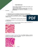 glandulas y epitelio