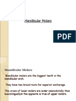 Mandibular Molars