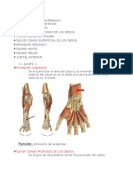 Anatomia Del Antabrazo Biomecanica