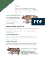 g26p-genetica-porcina
